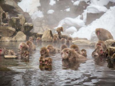 پارک میمون جیگوکدانی