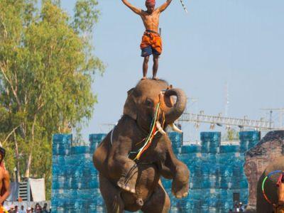 فستیوال گردهمایی فیل ها