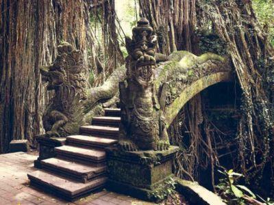 جنگل میمون عبود