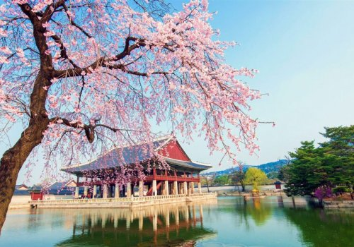 سفری جذاب به یکی از سرزمین های ببر آسیایی، در تور کره جنوبی